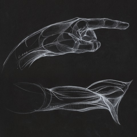 Anatomy Drawings by Mitch Weiss